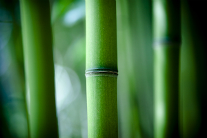 Beauty of Bamboo