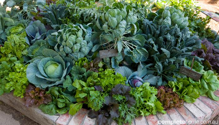 How to... design a food garden
