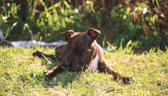 Expert advice: Dog-friendly backyards