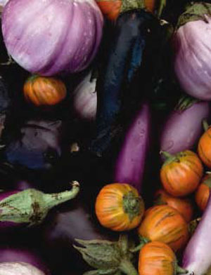 Time to plant: Eggplant