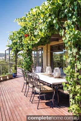 Vertical garden - creeping vines on a deck