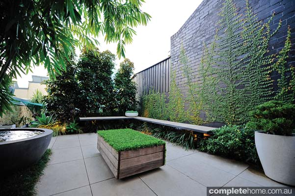 Real backyard inner city courtyard garden design for Courtyard landscaping australia