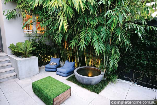 Real backyard inner city courtyard garden design for Courtyard garden designs australia