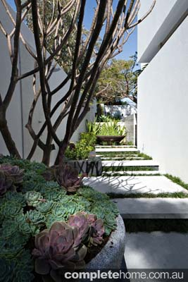 A contemporary landscape design from Tim Davies Landscaping.
