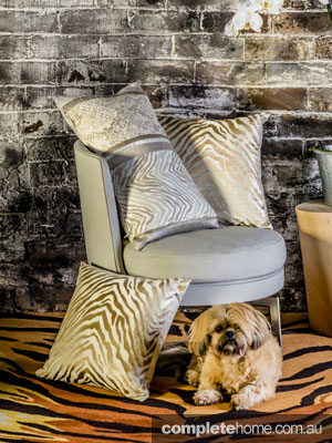 Zebra and animal print cushions