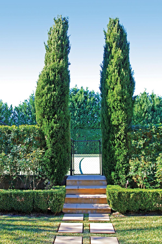 A Total Concept garden hedge