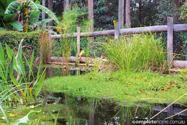 sublime garden art convert your swimming pool into an