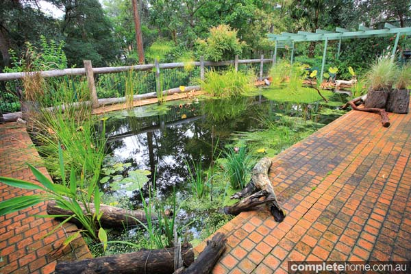 Convert your pool into a pond completehome for Pool with koi pond