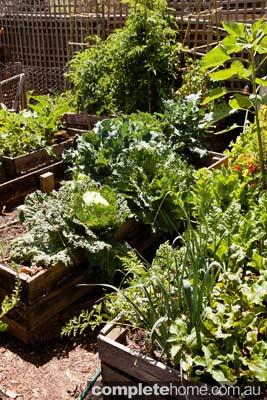 home grown food garden