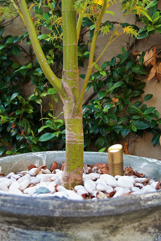 Contemporary Garden & Light Design