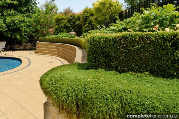 No matter where you venture and no matter what the time of year, you are greeted by a plethora of plants all expertly integrated into a relaxed, semi-formal garden of copious charm.