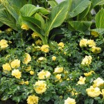 Garden tips: Wake up your roses