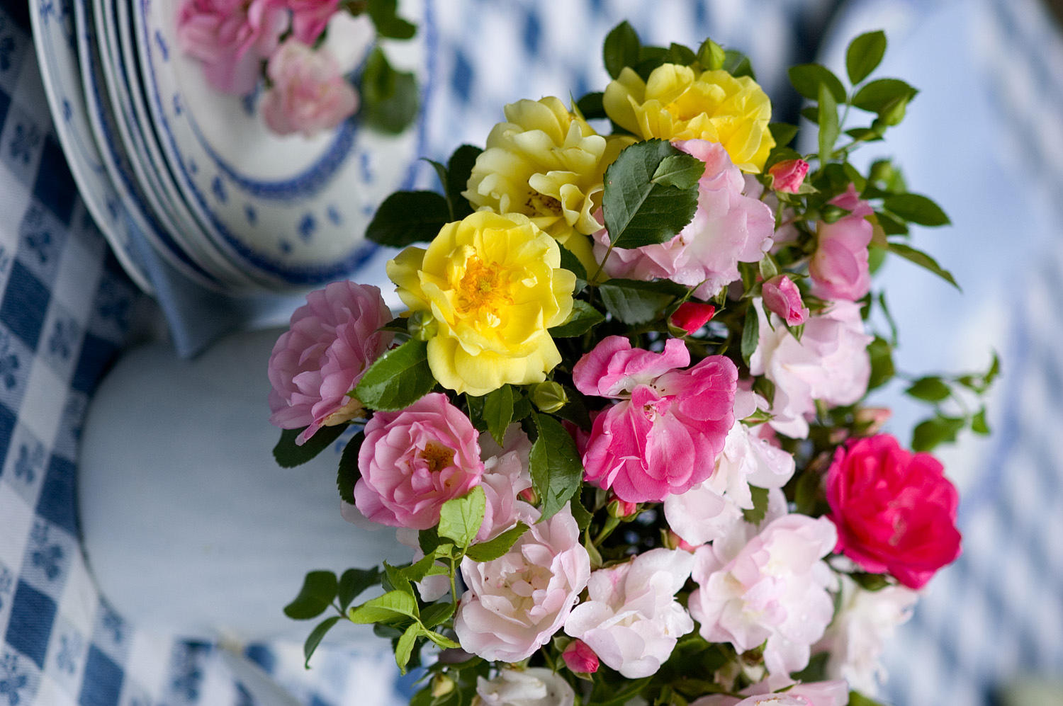 These fresh flowers work well within the garden