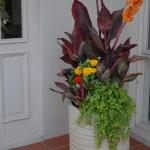 Colourful combos: Utilising pots for tropical plants