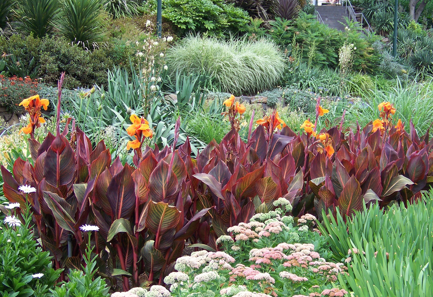 Colour combos are a perfect idea to spruce up your garden and add some colour to any landscape