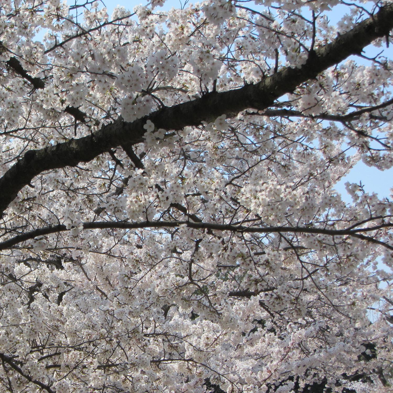 Garden tips: Spring-i-fy your garden
