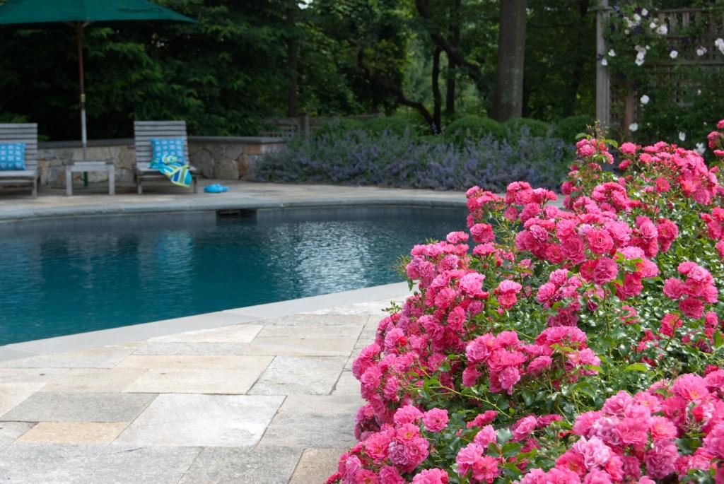 Pool in the garden