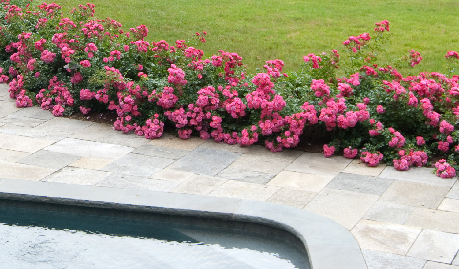 Resort style in your garden completehome pink roses mightylinksfo Image collections