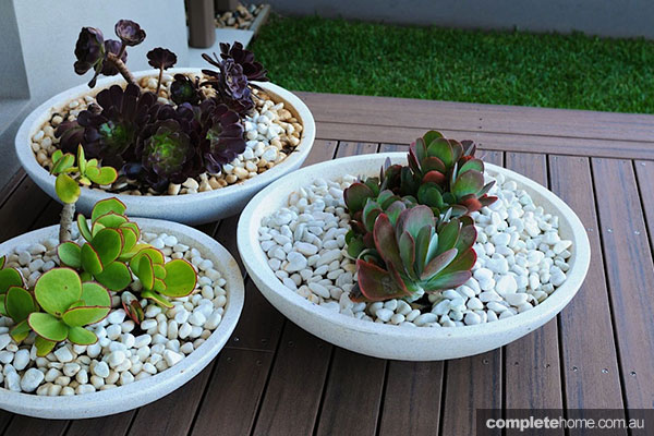 site design potted succulents