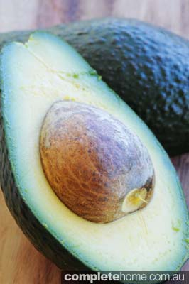 Avocado are bountiful now so keep picking