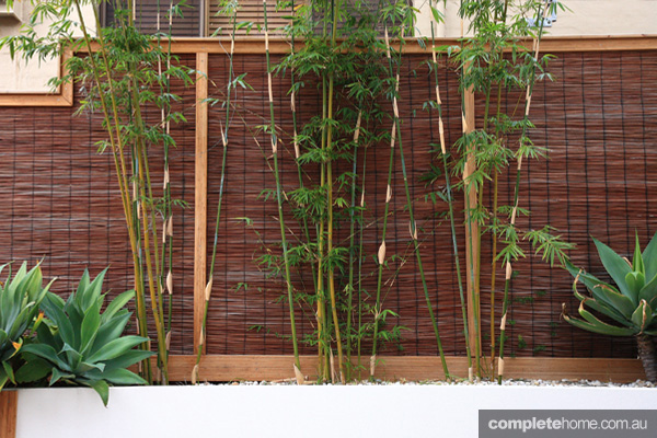 houseofbamboo_edited1
