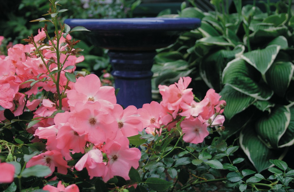 Gardening: good for the environment, your wellbeing and your outdoor area