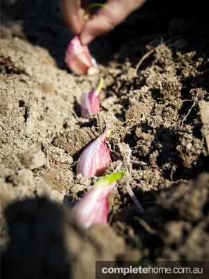 GOG_OrganicLiving_Garlic_EDITED2