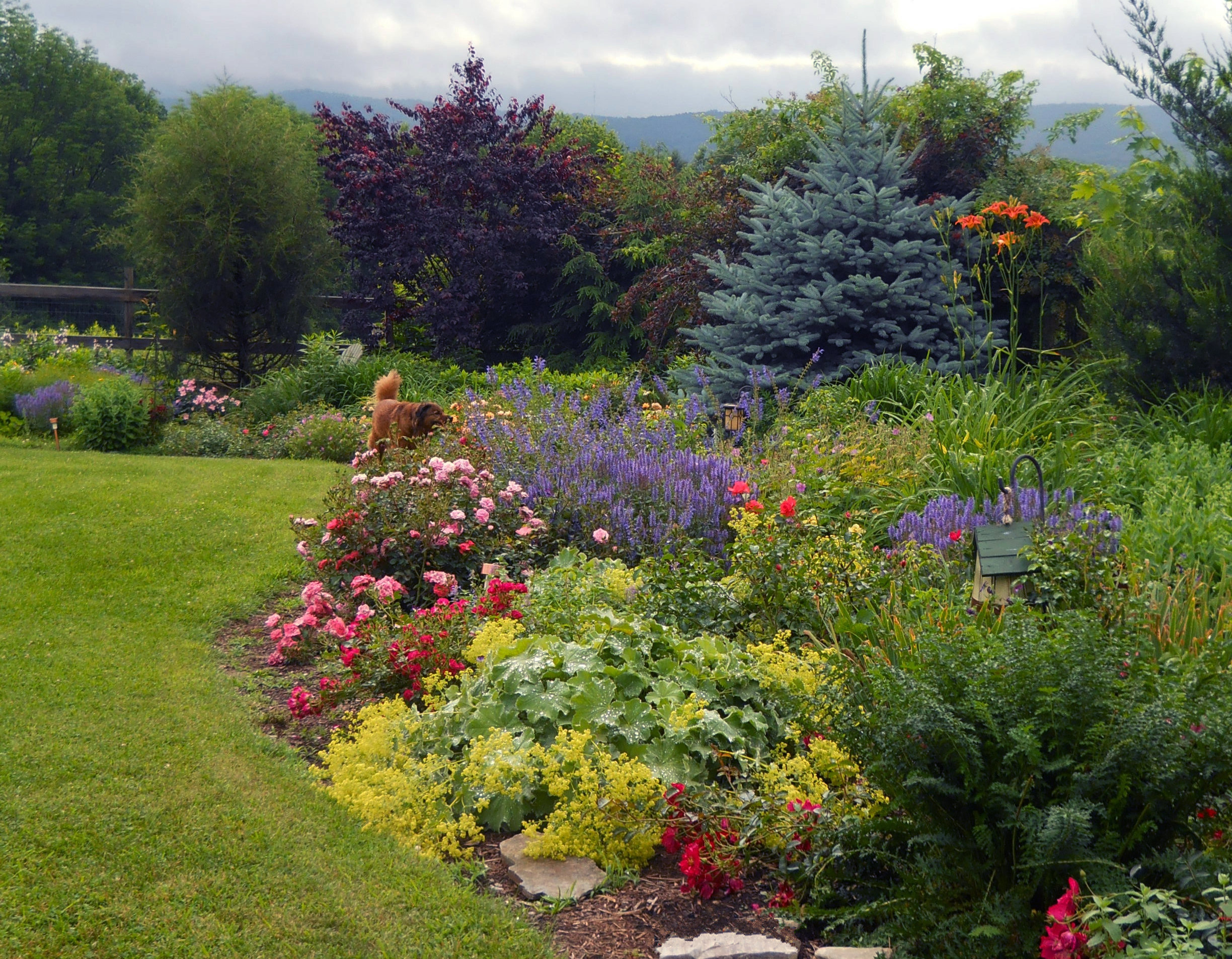 How to create easy care garden beds and borders completehome for Easy care flowers for garden