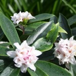 A look at the 2016 plant of the year