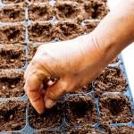 Garden diary: things to do in September