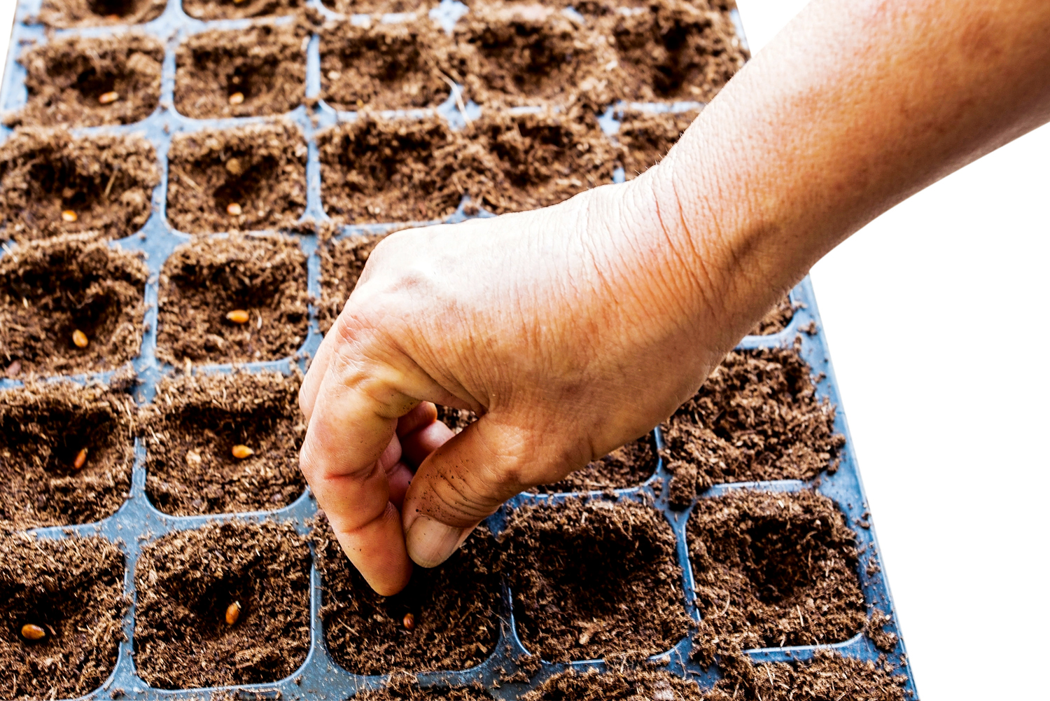 For boxout - Sow seeds that are hard to gernminate in punnets or seedling trays