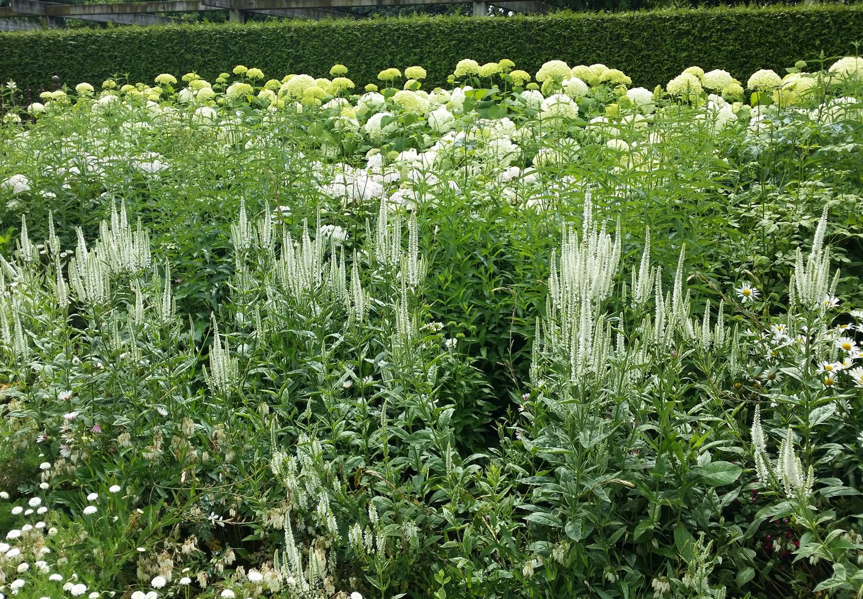 white garden HR