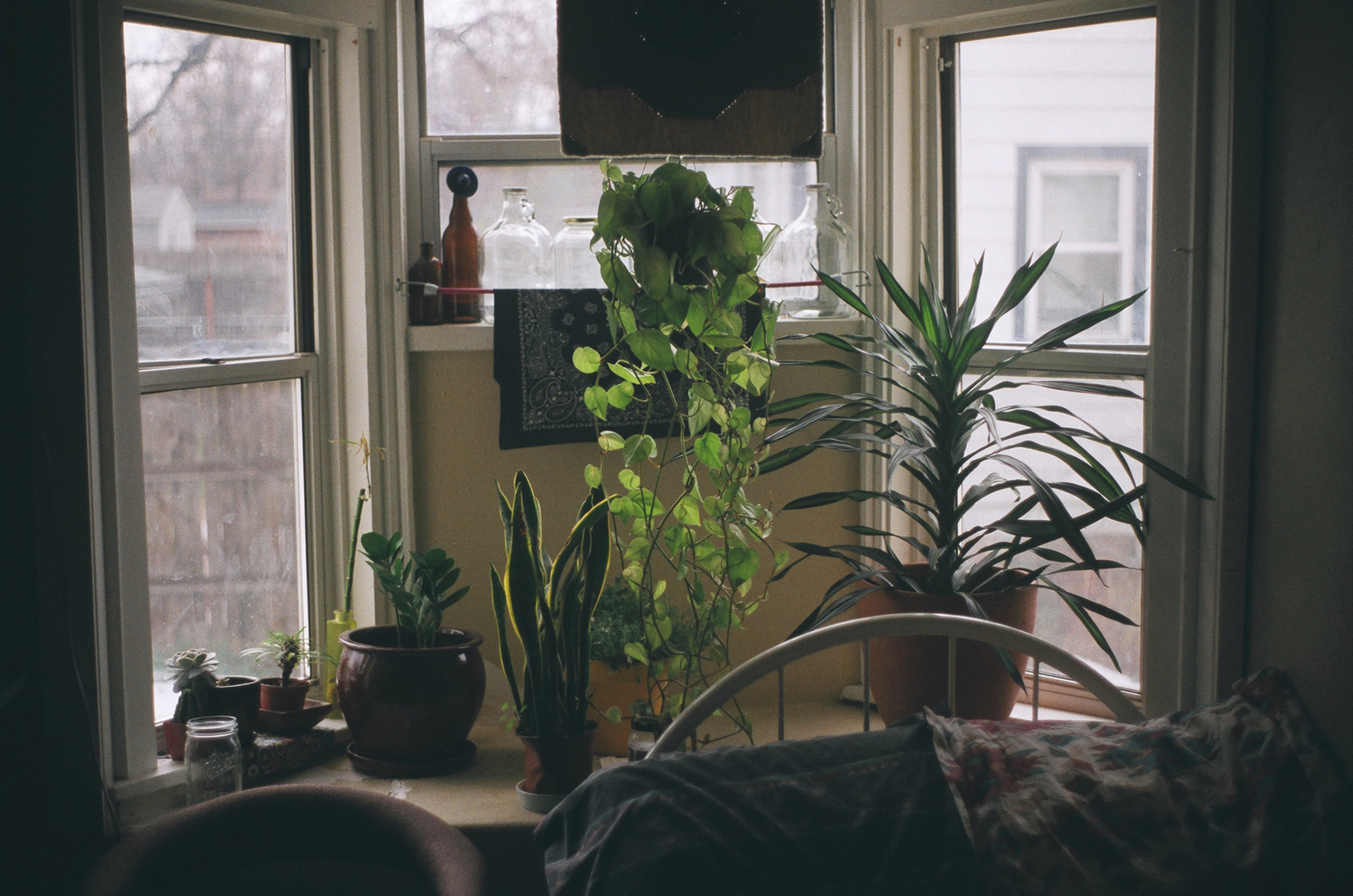 Which indoor plants, where? How to decide where to put your indoor plants