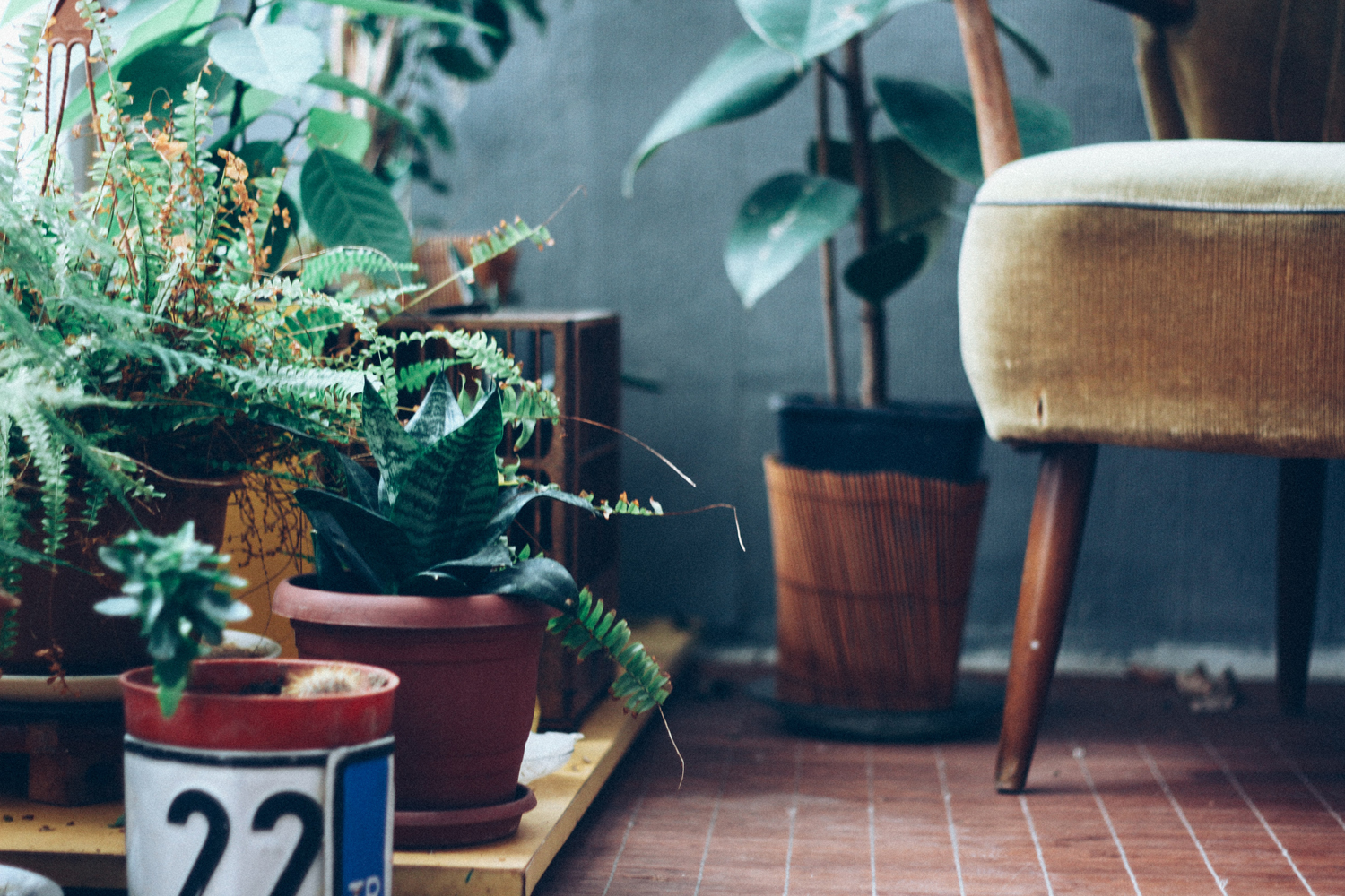 8 tips to help you care for indoor plants