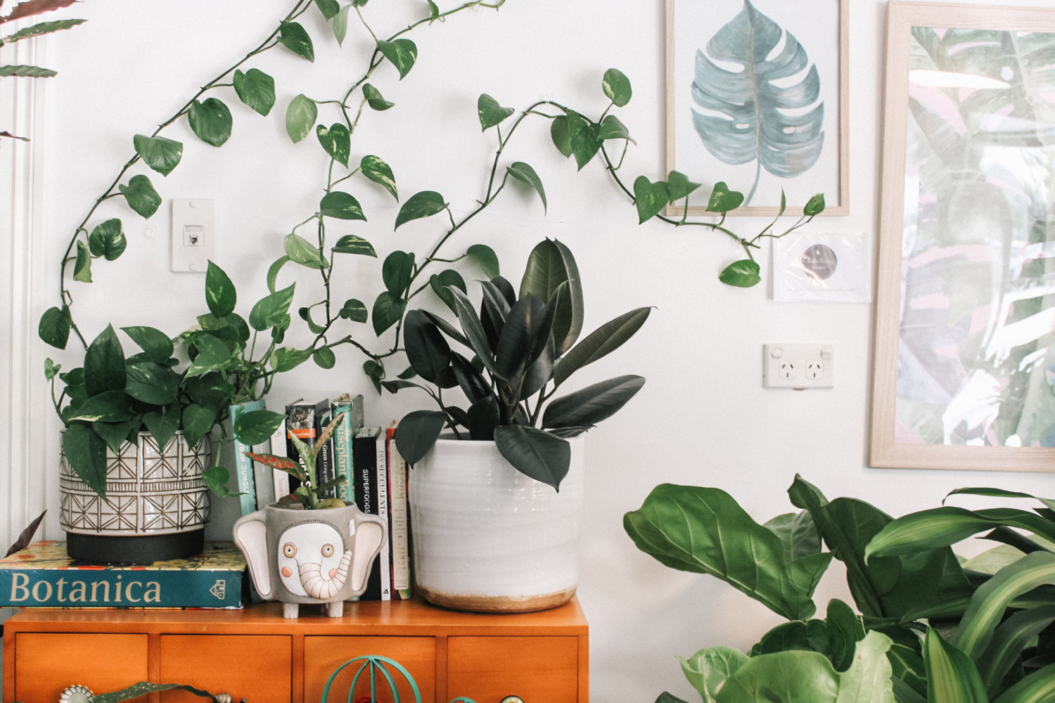 A beginner's guide to growing indoor and house plants